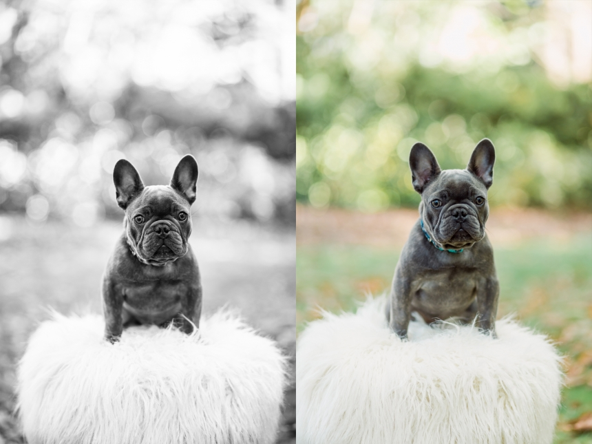 seattle pet photography